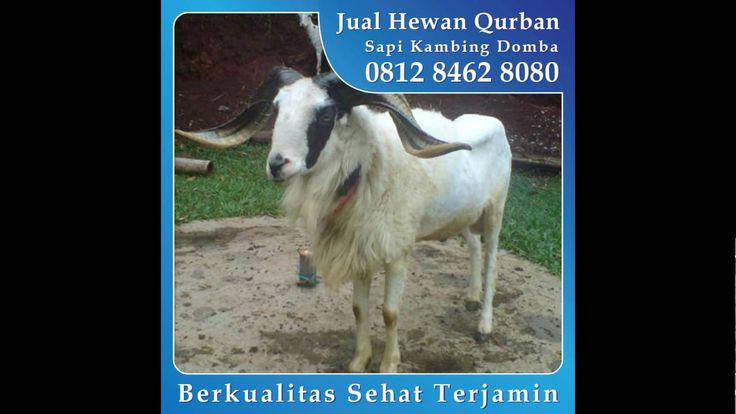 0812_8462_8080 (Tsel) Jual Hewan Qurban di Caman Jatibening Bekasi