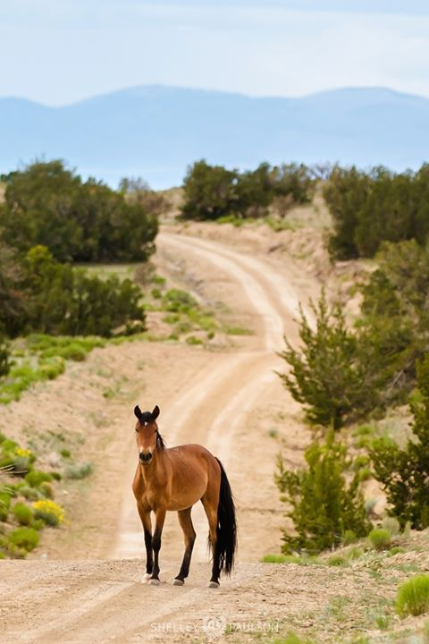 It's been 10 years since I've photographed wild horses in