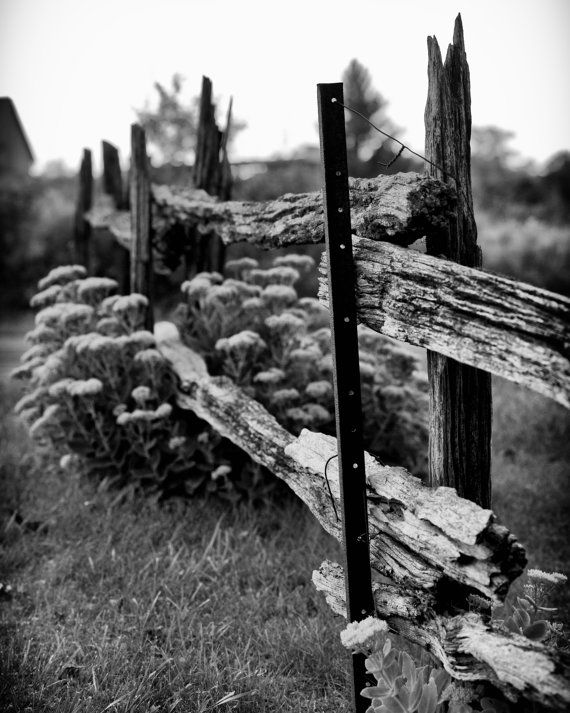 "Featured in the Etsy Treasury 'Forgotten Fences"" by Tanja Smith  Fine Art 5""x7"" Black & White Landscape Photograph ""Forgotten Fence"" features high contrast black and white rustic farm fence and flowers"