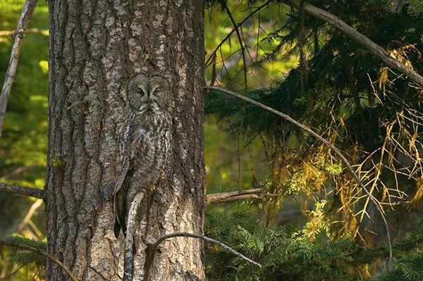 20 Hidden Animals in Photos - Camouflage Art