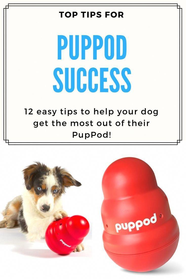 Self Confident Tripled Cool Dog Training Play Video Dog Training