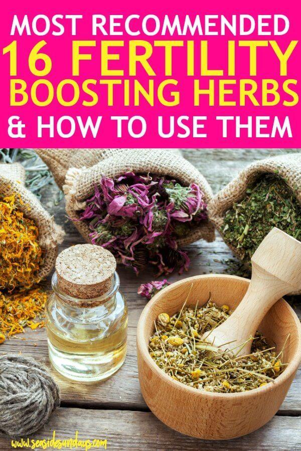 16 Fertility Herbs To Help You Get Pregnant Fast | Fertility