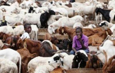 Eid el Kabir: Ram Sellers Bemoan Low Patronage