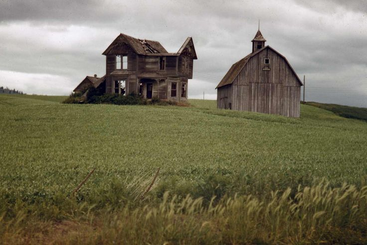 | In the Palouse, the Okanagon, the green fields of Idaho, wheat fields ... | Agriculture | Pinterest | Image search, Moscow and Antiques