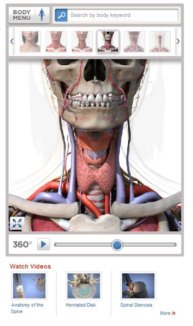 Heathline Body Maps - A Good Resource for Anatomy Lessons
