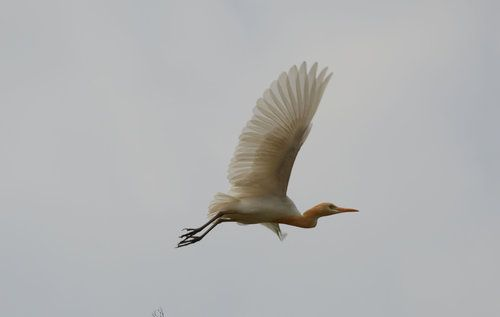 Egert by prabhu viswa