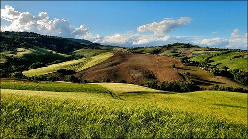 Che ne sai tu di un campo di grano..... (L. Battisti)