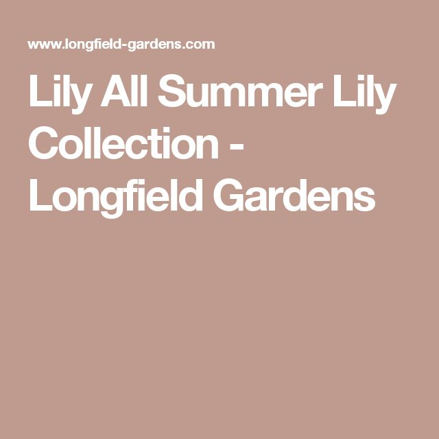 Lily All Summer Lily Collection - Longfield Gardens