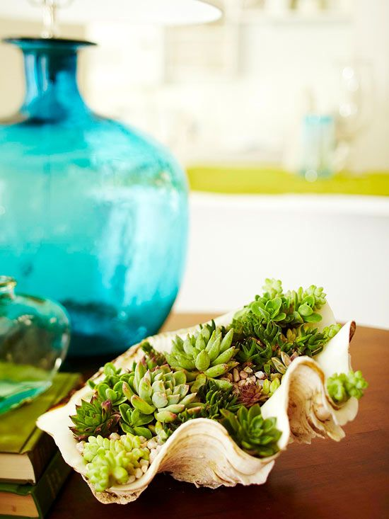 Bring some green inside! Plant Succulents in Seashells!
