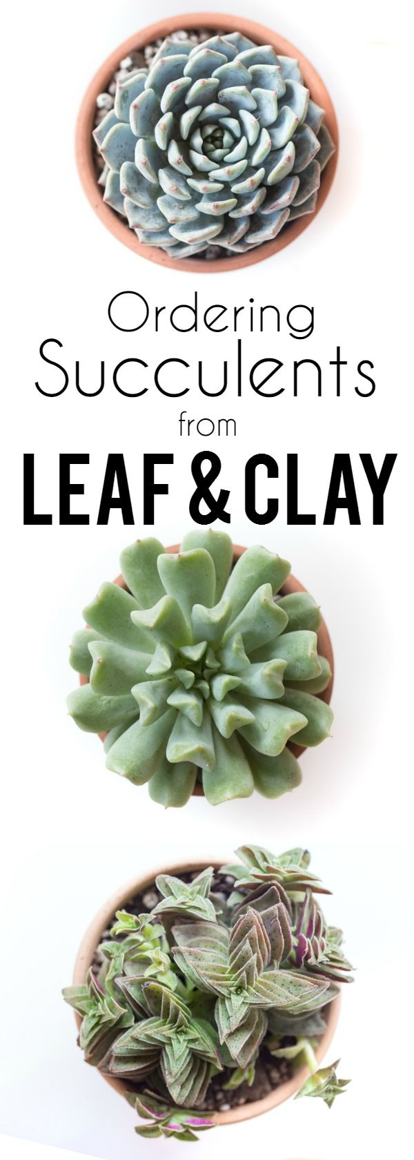 Ever wonder where to buy succulents online? Leaf and Clay has the best selection of succulents and cactus plants (plus there's even a way to get them free! → https://www.leafandclay.co/collections/succulents?rfsn=537287.d46d5)