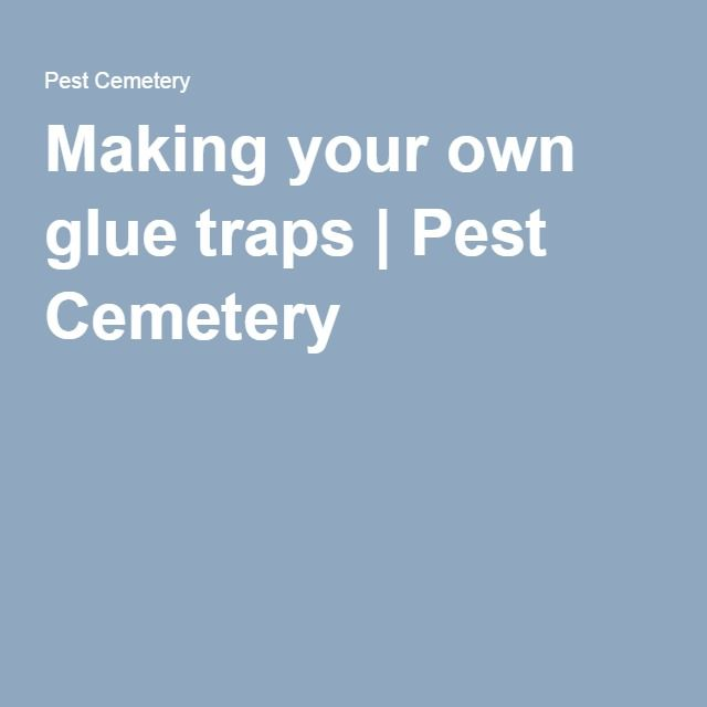 Making your own glue traps | Pest Cemetery
