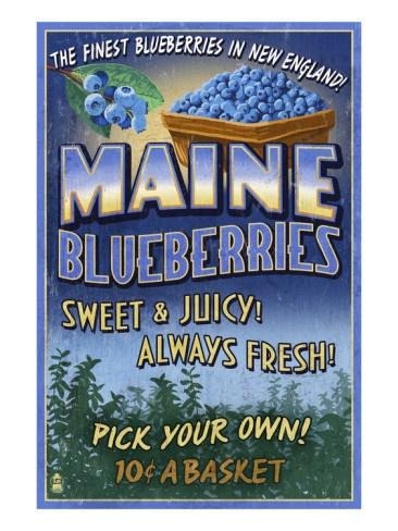 Maine Blueberries Art Print