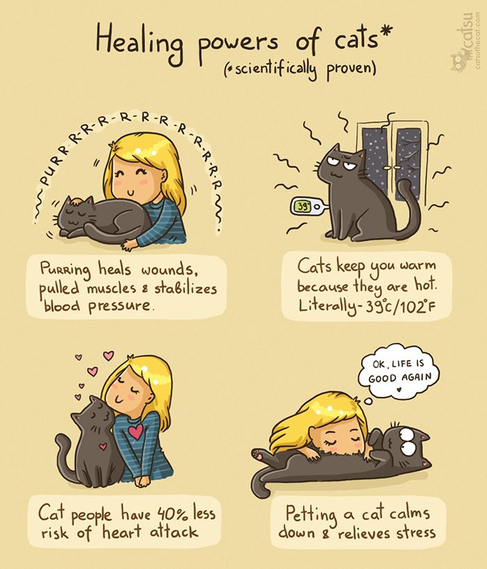 The one about staying healthy | Catsu The Cat