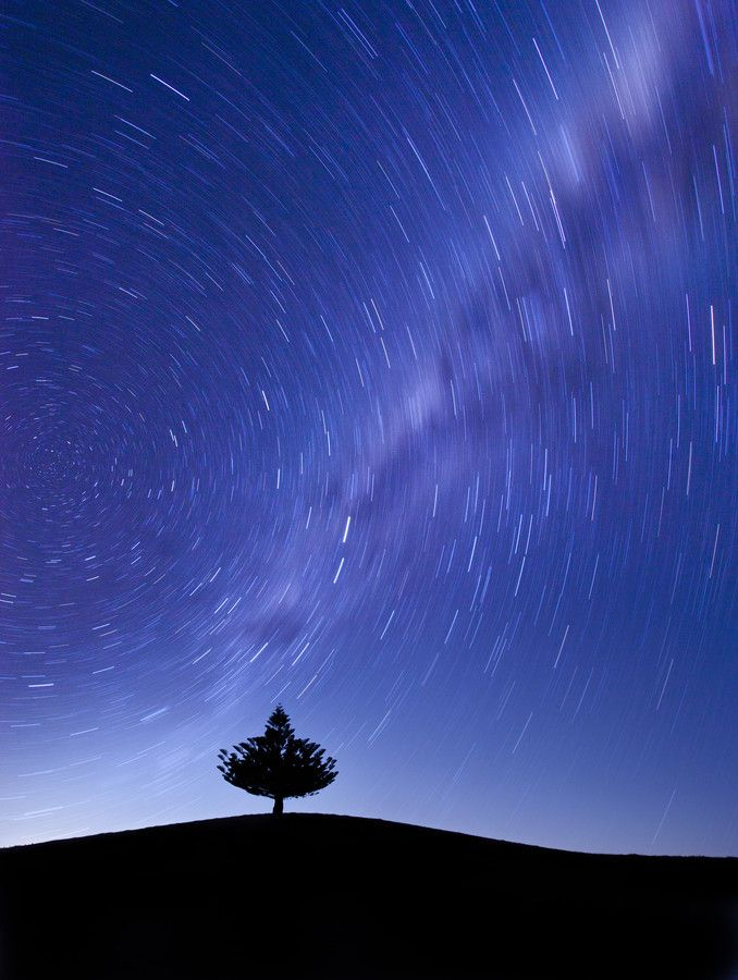 star and tree by jong beom kim on 500px