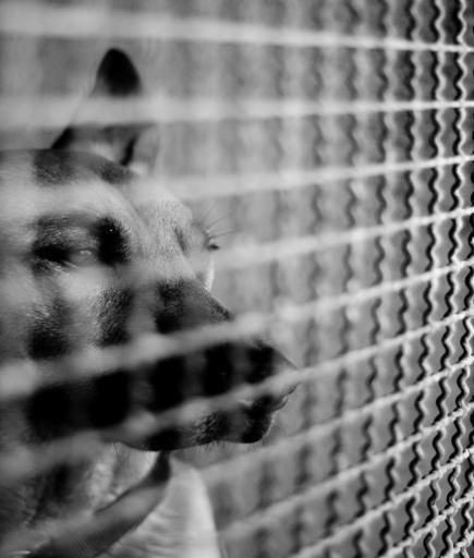 Gli affari della mafia su canili e traffici clandestini di animali  http://ambientebio.it/gli-affari-della-mafia-su-canili-e-traffici-clandestini-di-animali/