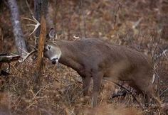 Find a hunting lease