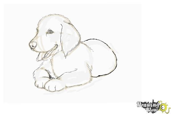 How to Draw a Golden Retriever Puppy.Golden retriever pictures are very cute. Do you have one at home? If you want to draw a Golden Retriever we can work together. I can teach you how to draw a Golden Retriever. We can draw a medium to large sized dog. Golden Retrievers have an instinctive love of water.Lets start by drawing three connected oval shape circles for his head, body and tail. Illustrate his feet. Sketch facial details in a tongue out pose. Sketch his ears. Highlight your drawing…