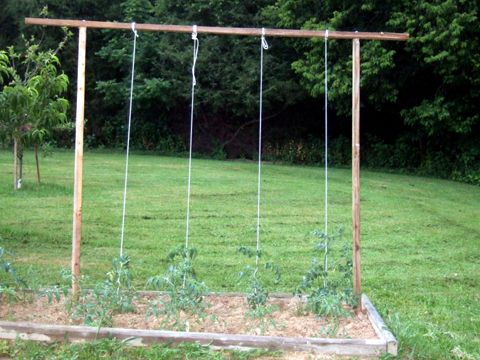 Tomato Trellis. tie clothesline to the bottom of the tomato plant and secure to top beam to keep straight