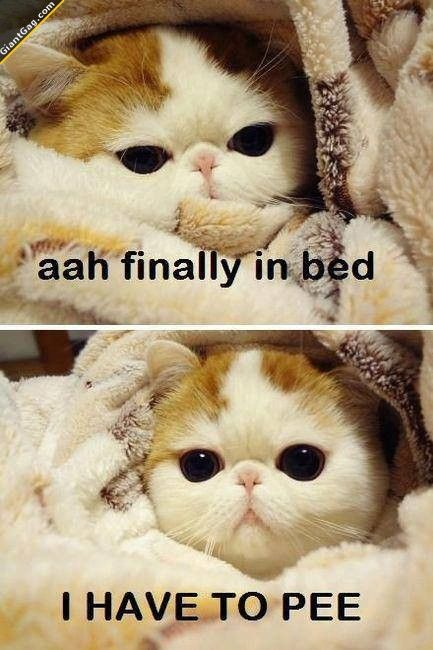 Every freaking time... Finally In Bed And Have To Pee, Click the link to view today's funniest pictures!..