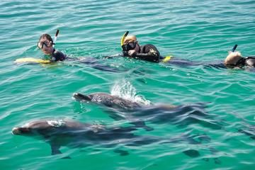 Swim with Dolphins Day Trip from Perth - Perth | Viator