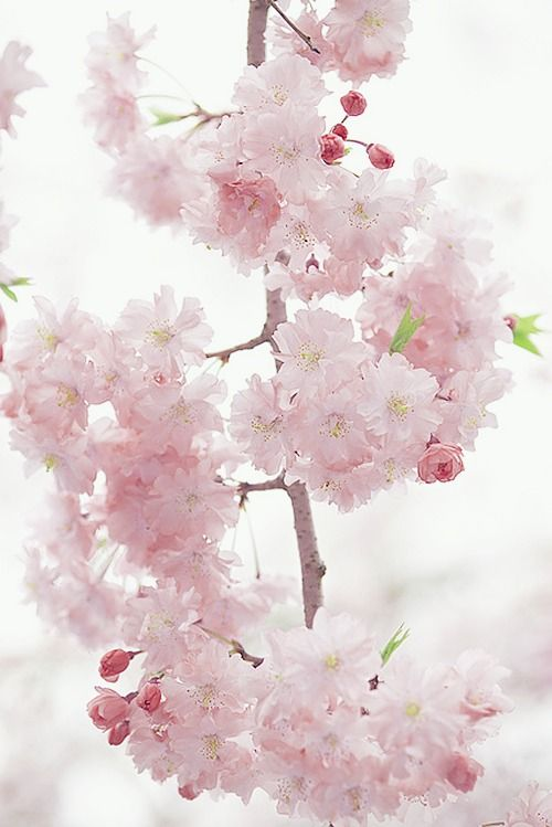 Some simple blossoms