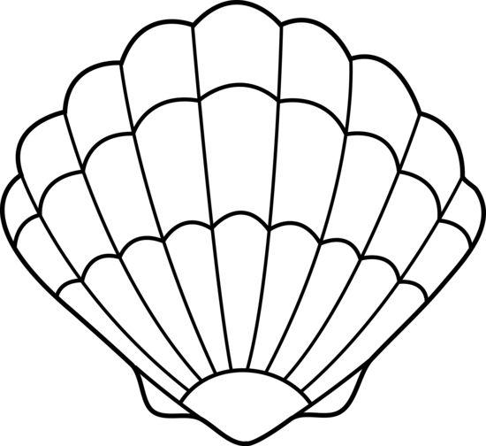 seashell lineart