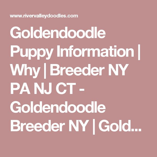 Goldendoodle Puppy Information   Why   Breeder NY PA NJ CT - Goldendoodle Breeder NY   Goldendoodle Puppies NY   Doodles by River Valley   Doodle Puppies