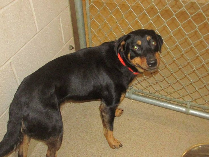 Shelby, NC, Animal Shelter, my name is a #, which is:  35230472.