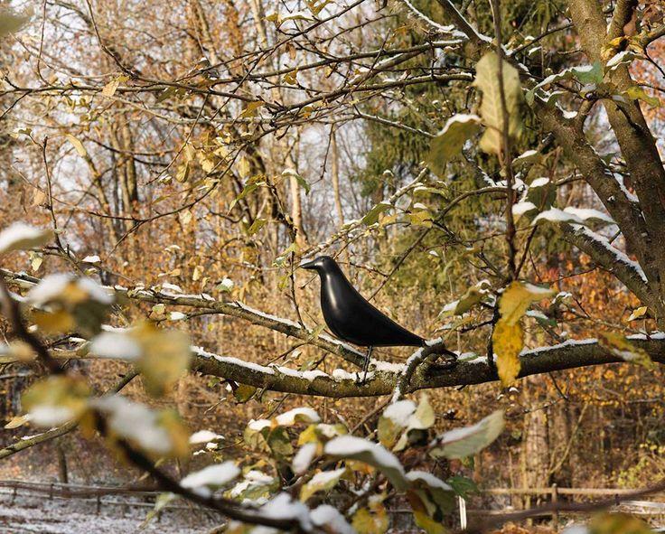 433 best Decor u2013 Put an Eames House Bird On It images on Pinterest - esszimmer 6 st amp uuml hlen