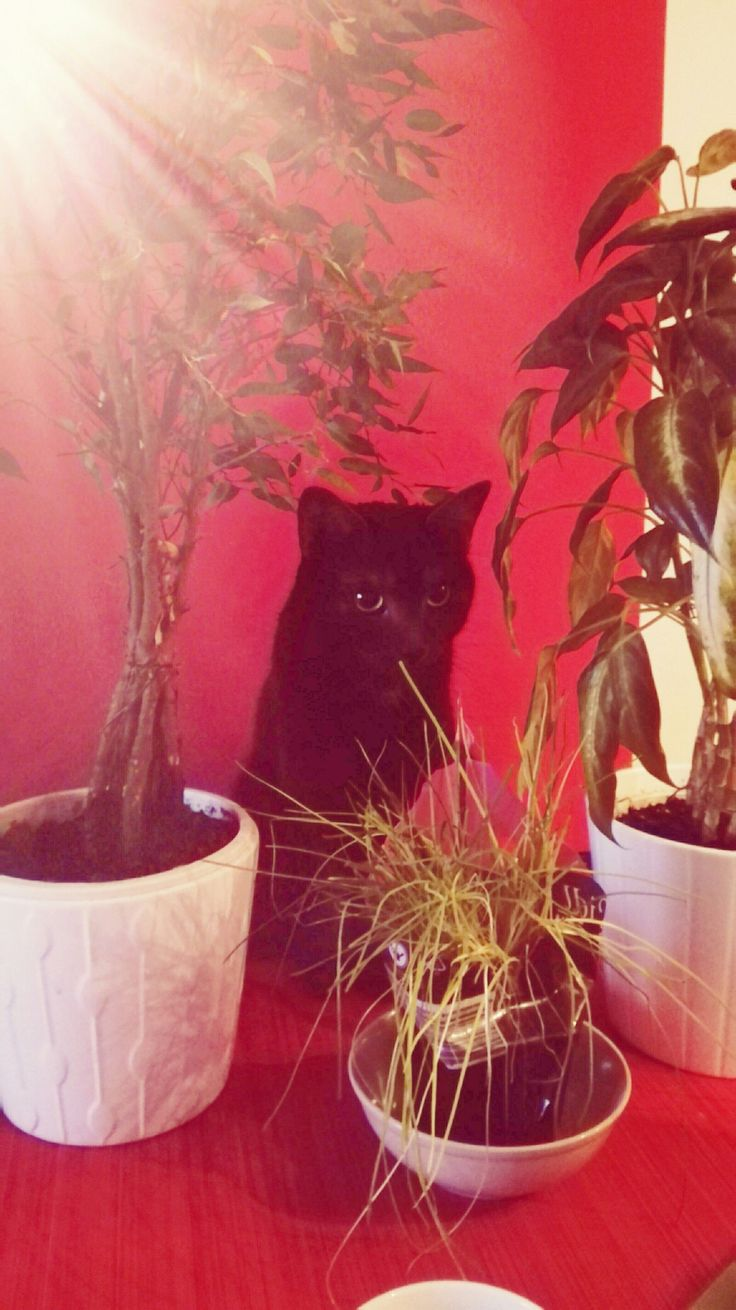 Kitty in the jungle 👑