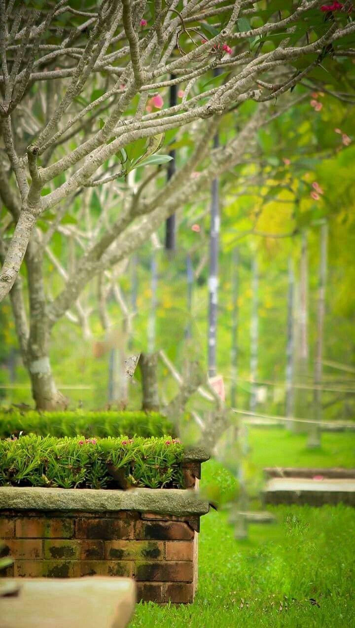 Download 6600 Background Hd Garden Image HD Paling Keren