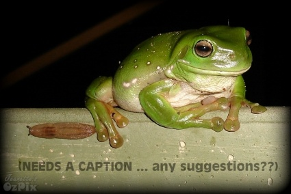 FROGGY PICS - CAN YOU HELP ME WITH A CAPTION??  I am currently sorting out and editing froggy pics... only got about 800 to go... lol... anyhow, some are quite funny, and I want to add captions, so I could use some suggestions... here is the first...  THE BEST CAPTION WINS A FLY!! :)