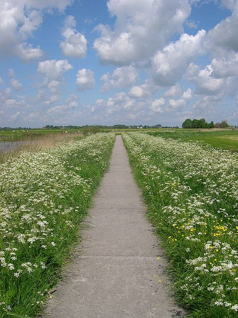 summer holland | Flickr Atsje Bosma - Photo Sharing. Biking between Leeuwarden and Sneek along the river in Friesland. This is a part of the Elfstedentochtroute.