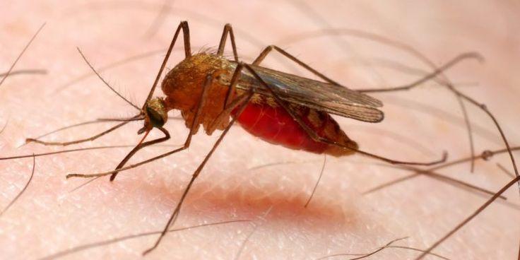 """Cegah Gigitan Nyamuk, Anak Sekolah Dianjurkan Gunakan Pakaian Tertutup FaktualNews.co – Anak usia sekolah menjadi kelompok yang rentan terserang penyakit demam berdarah dengue (DBD) pada musim penghujan. Anak usia 7-12 tahun paling beresiko terkena gigitan nyamuk aedes aegypti. Pasalnya, anak usia sekolah berada di sekolah sejak pagi hingga siang atau sore hari, yang merupakan waktu aktif nyamuk Aedes aegypti. """"Anak-anak duduk di kelas dari pagi sampai siang, kaki di bawah meja jadi sasaran…"""