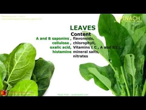 Useful and dangerous properties of spinach for women, men and children 41