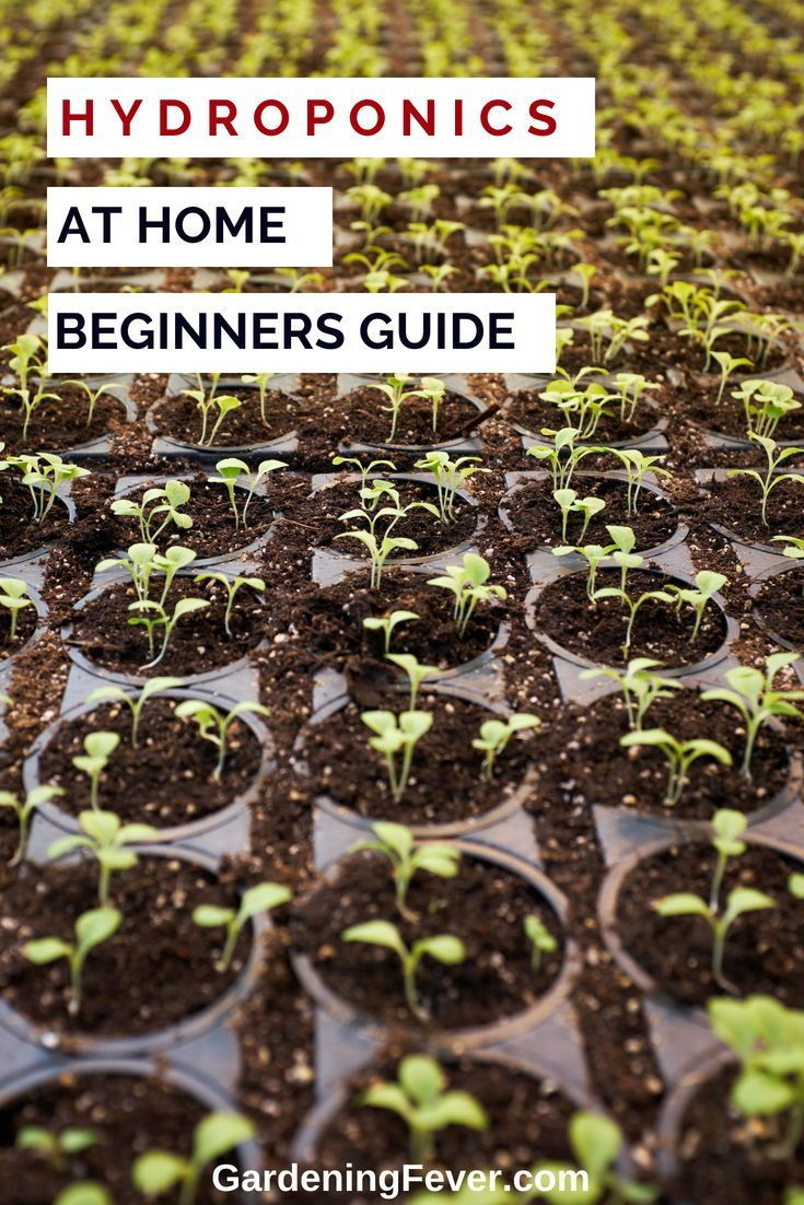 Create A Hydroponic Systems Supply At Home. DIY Your Hydroponics Even If  You A Beginner With This Hydroponics Guide. Hydroponics At Home Gardening  Is Easier ...