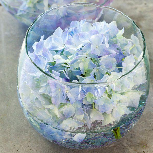 10 best images about vase boule on pinterest aquarium for Aquarium boule