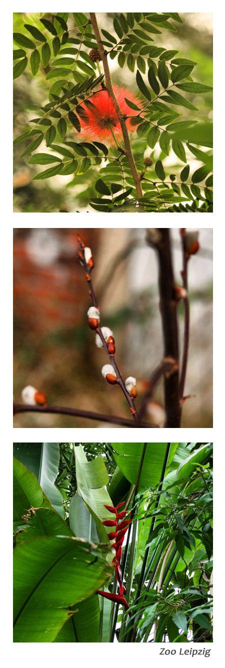 Vielfältige Flora in der Tropenhalle des Leipziger Zoo #Urlaub #Ausflug im #Frühling #Toskana