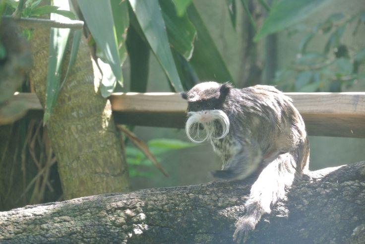 Perth Zoo - nice Mo!