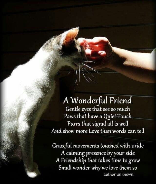 Dog Angel Quotes: Best 25+ Pet Loss Quotes Ideas On Pinterest