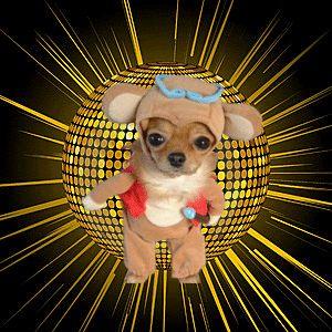 perrito baile lento photo doggi-disco.gif