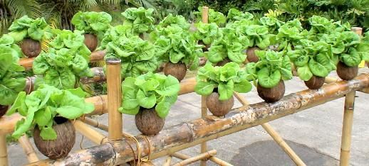 Coconut + bamboo hydroponic system