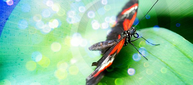 In this lesson, students explore the life cycle of a butterfly as they write and illustrate stories that show the stages of a butterflys metamorphosis.
