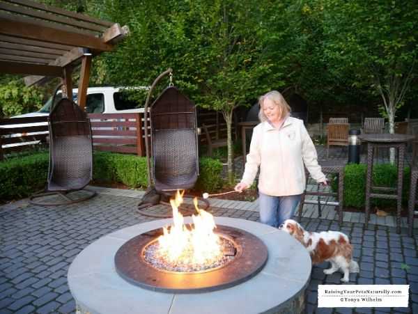 Dog Friendly Even Hotel In Norwalk Ct Review Dog Friendly Hotels Luxury Pet Dog Friends