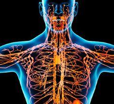 Лимфа — живая вода нашего организма. Экология здоровья: Лимфатическая система – одна из самых сложных и хитро устроенных систем человека. Это система вывода ядов из организма, особенно бактериальных и грибково-паразитарных ядов простейших