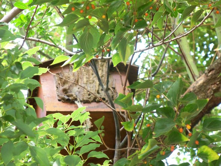 Bee Removal in Johannesburg, Removed bees in an owl box