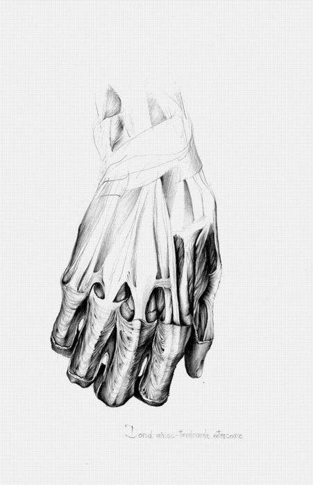 Anatomy Illustration. Wonderful.