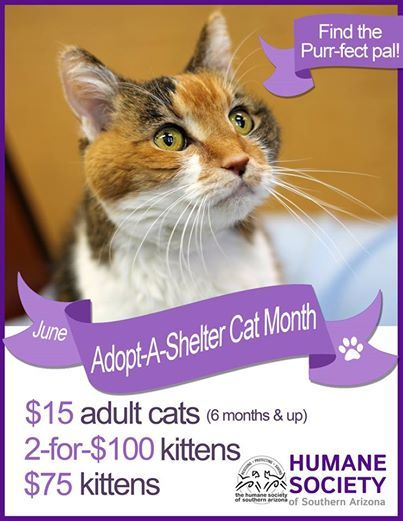 How To Adopt A Cat From Humane Society