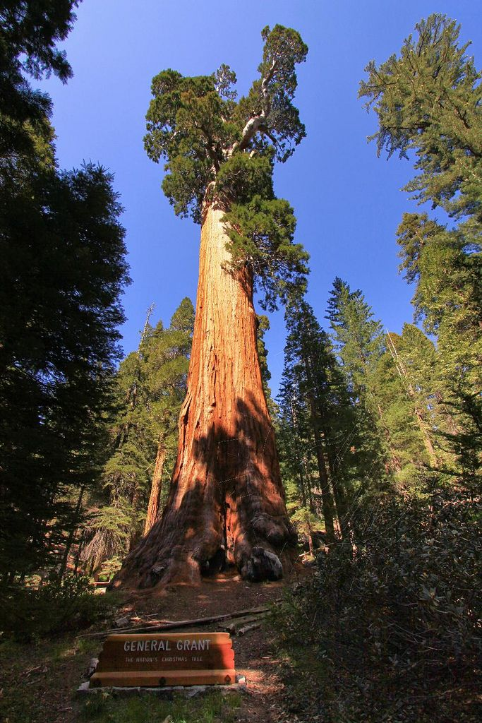 General Grant Tree, Kings Canyon National Park, Tulare ...