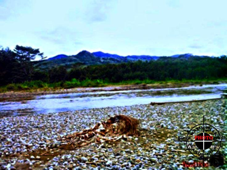 Mbarliam Sungai Baliem, Wamena, Papua.